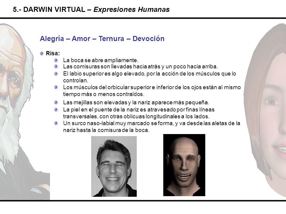 5.- DARWIN VIRTUAL – Expresiones Humanas Alegría – Amor – Ternura – Devoción Risa: La boca se abre ampliamente. Las comisuras son llevadas hacia atrás