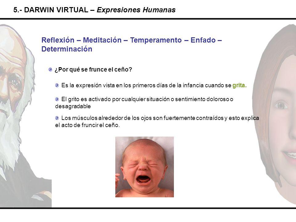 5.- DARWIN VIRTUAL – Expresiones Humanas Reflexión – Meditación – Temperamento – Enfado – Determinación ¿Por qué se frunce el ceño? Es la expresión vi
