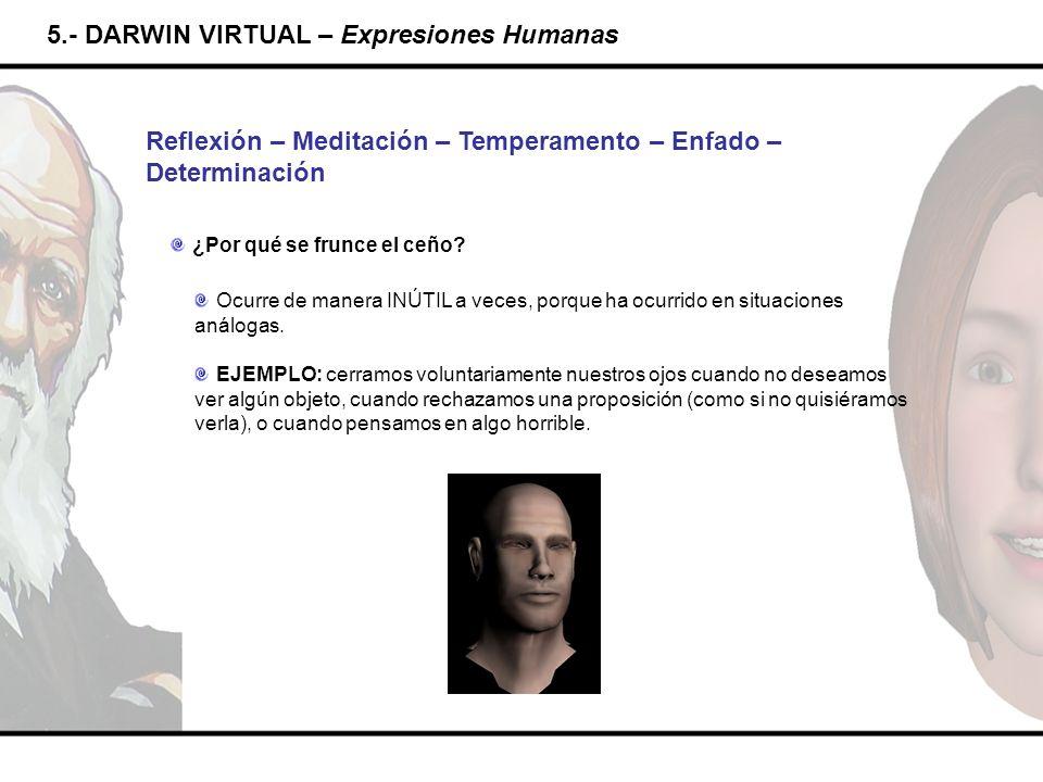 5.- DARWIN VIRTUAL – Expresiones Humanas Reflexión – Meditación – Temperamento – Enfado – Determinación ¿Por qué se frunce el ceño? Ocurre de manera I