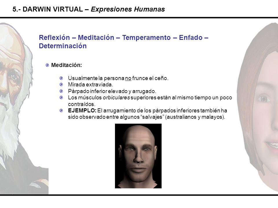 5.- DARWIN VIRTUAL – Expresiones Humanas Reflexión – Meditación – Temperamento – Enfado – Determinación Meditación: Usualmente la persona no frunce el