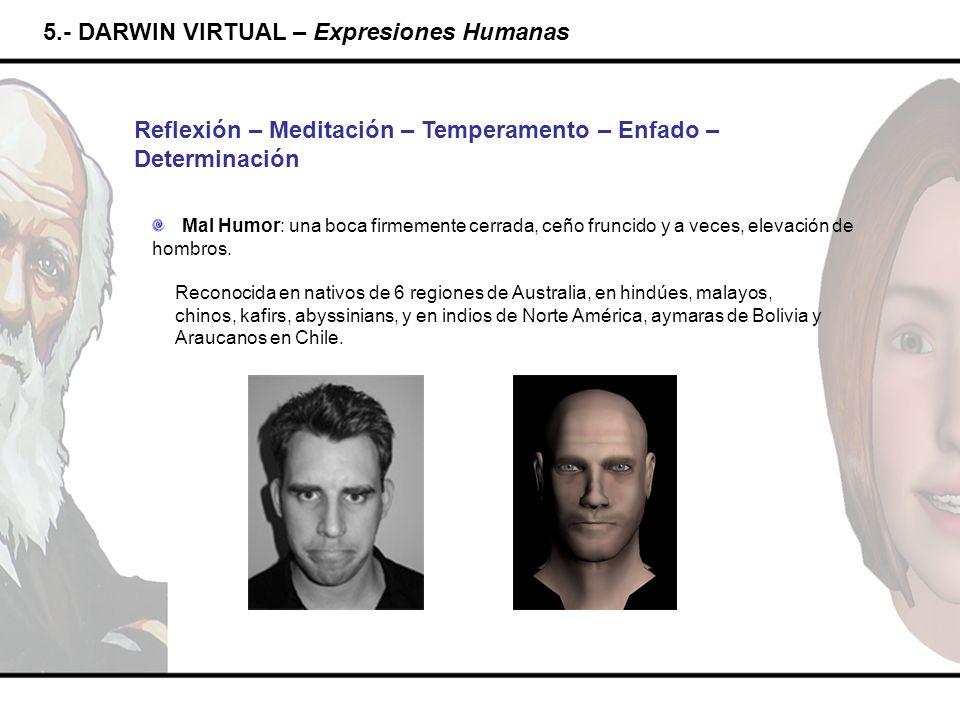 5.- DARWIN VIRTUAL – Expresiones Humanas Reflexión – Meditación – Temperamento – Enfado – Determinación Mal Humor: una boca firmemente cerrada, ceño f