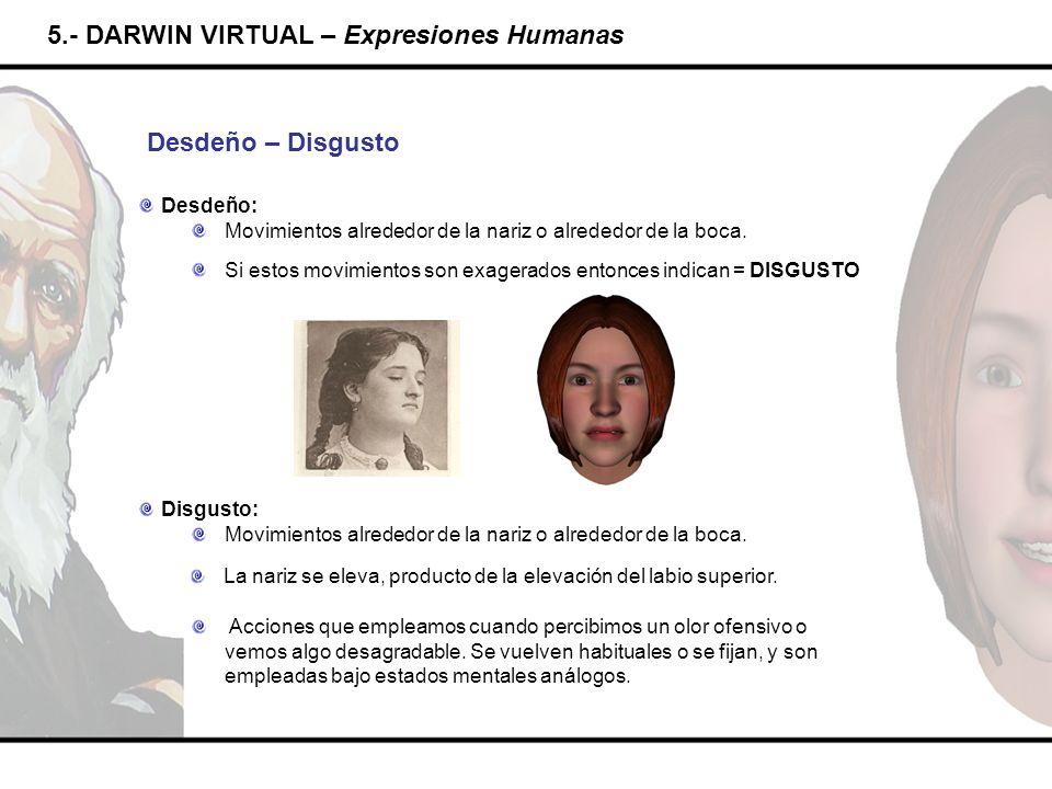5.- DARWIN VIRTUAL – Expresiones Humanas Desdeño – Disgusto Desdeño: Movimientos alrededor de la nariz o alrededor de la boca. Si estos movimientos so