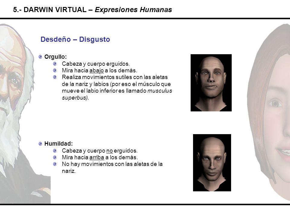 5.- DARWIN VIRTUAL – Expresiones Humanas Desdeño – Disgusto Orgullo: Cabeza y cuerpo erguidos. Mira hacia abajo a los demás. Realiza movimientos sutil