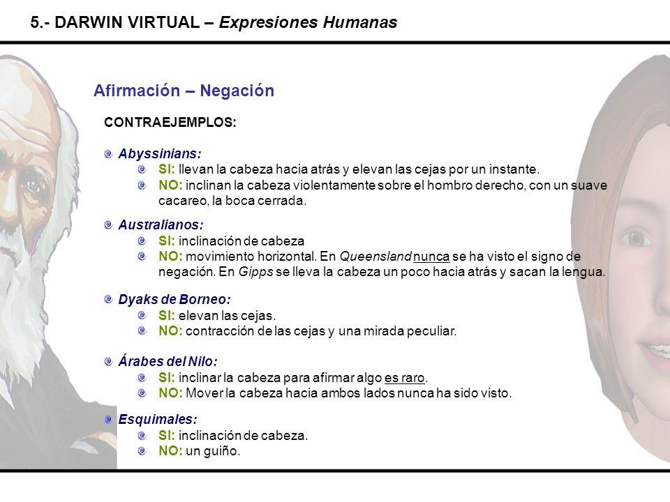5.- DARWIN VIRTUAL – Expresiones Humanas Afirmación – Negación CONTRAEJEMPLOS: Abyssinians: SI: llevan la cabeza hacia atrás y elevan las cejas por un