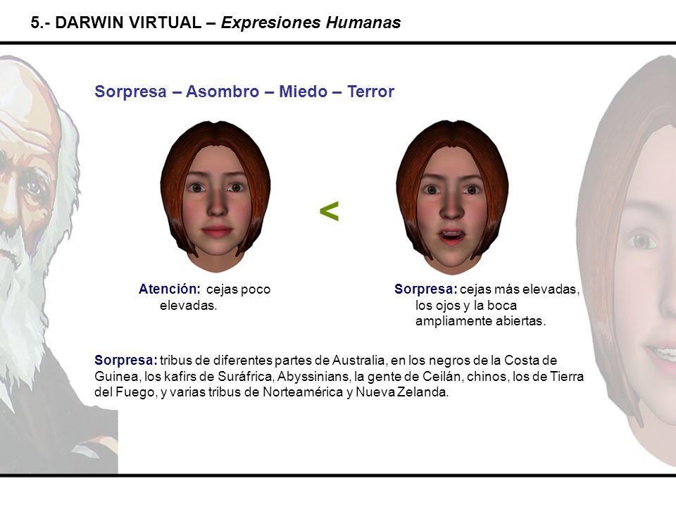 5.- DARWIN VIRTUAL – Expresiones Humanas Sorpresa – Asombro – Miedo – Terror Atención: cejas poco elevadas. < Sorpresa: tribus de diferentes partes de