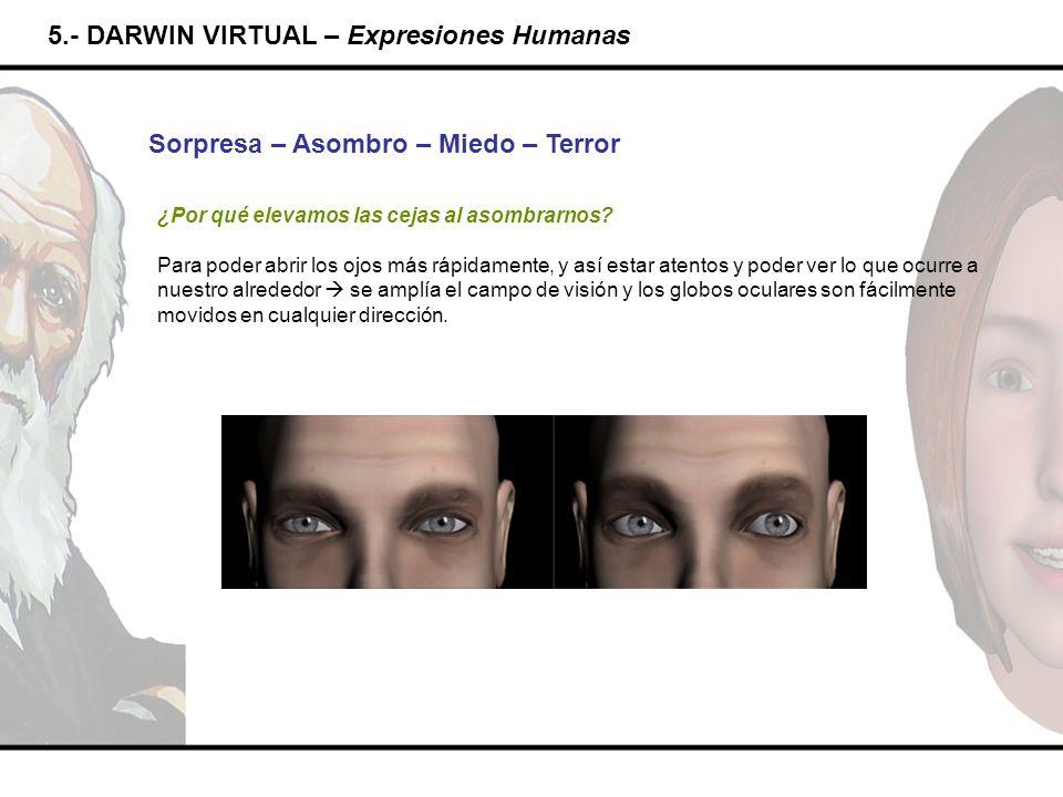 5.- DARWIN VIRTUAL – Expresiones Humanas Sorpresa – Asombro – Miedo – Terror ¿Por qué elevamos las cejas al asombrarnos? Para poder abrir los ojos más