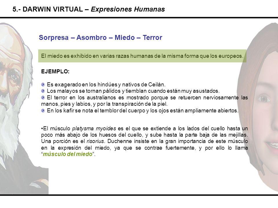 5.- DARWIN VIRTUAL – Expresiones Humanas Sorpresa – Asombro – Miedo – Terror El miedo es exhibido en varias razas humanas de la misma forma que los eu