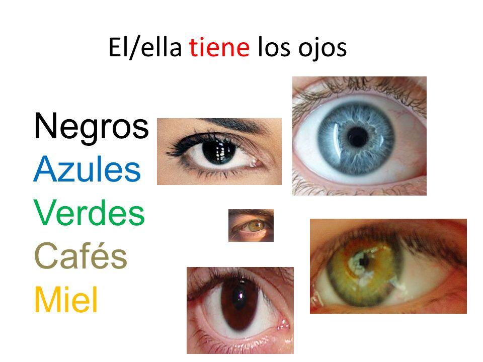 El/ella tiene los ojos Negros Azules Verdes Cafés Miel