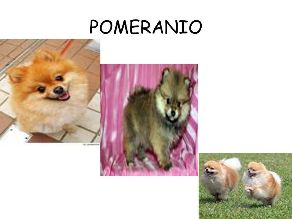 POMERANIO