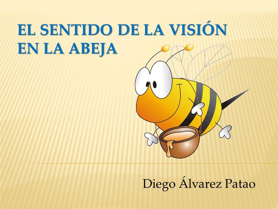 EL SENTIDO DE LA VISIÓN EN LA ABEJA Diego Álvarez Patao