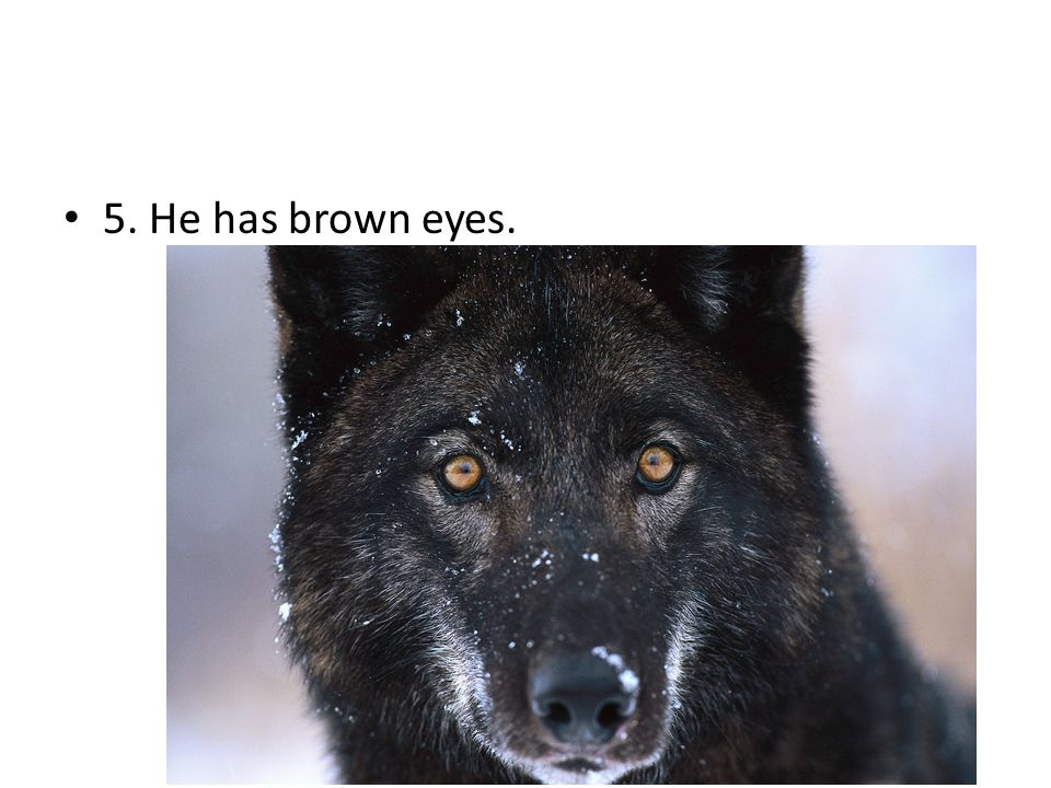 5. He has brown eyes.