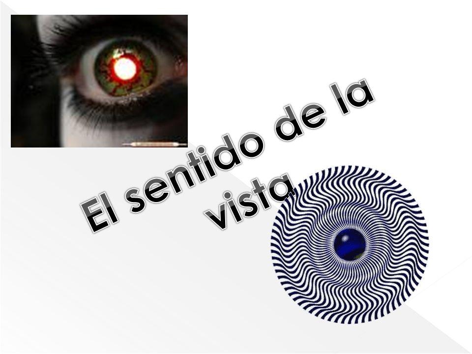 1)El ojo 2)La retina 3)El mecanismo cerebral para interpretar las señales visuales 4)El mecanismo cerebral para controlar las funciones motoras de los ojos.