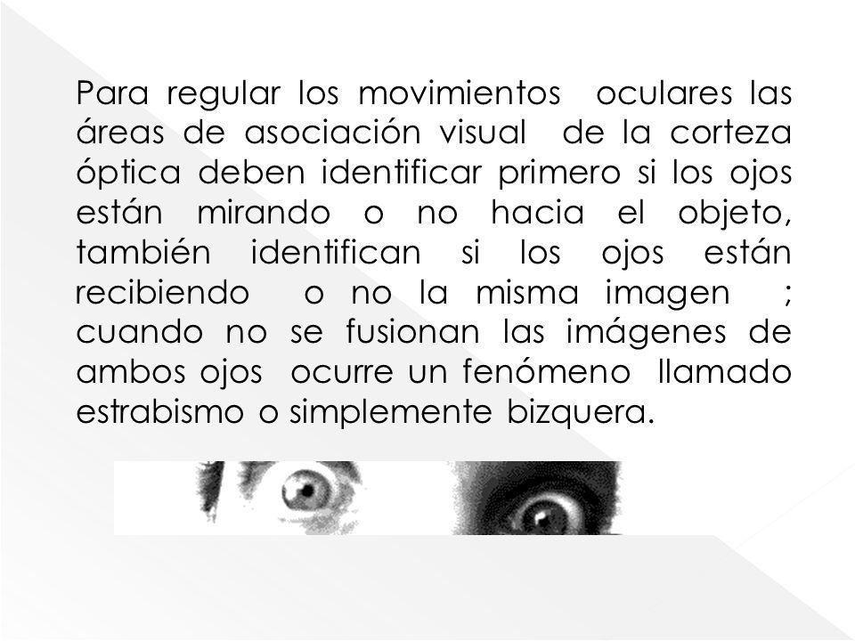 Para regular los movimientos oculares las áreas de asociación visual de la corteza óptica deben identificar primero si los ojos están mirando o no hac