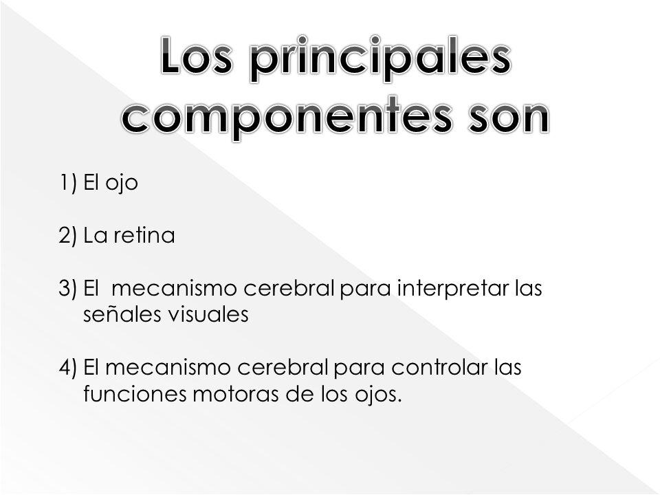 1)El ojo 2)La retina 3)El mecanismo cerebral para interpretar las señales visuales 4)El mecanismo cerebral para controlar las funciones motoras de los