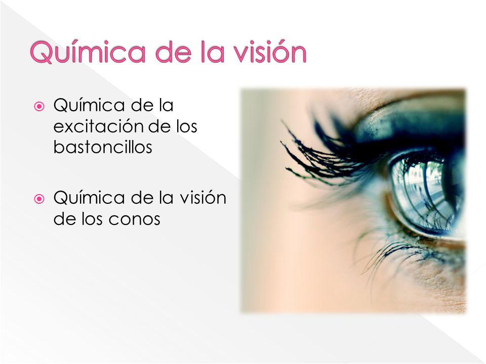 Astigmatismo El ojo tiene visión distante para algunos de los rayos luminosos y visión corta para el resto.