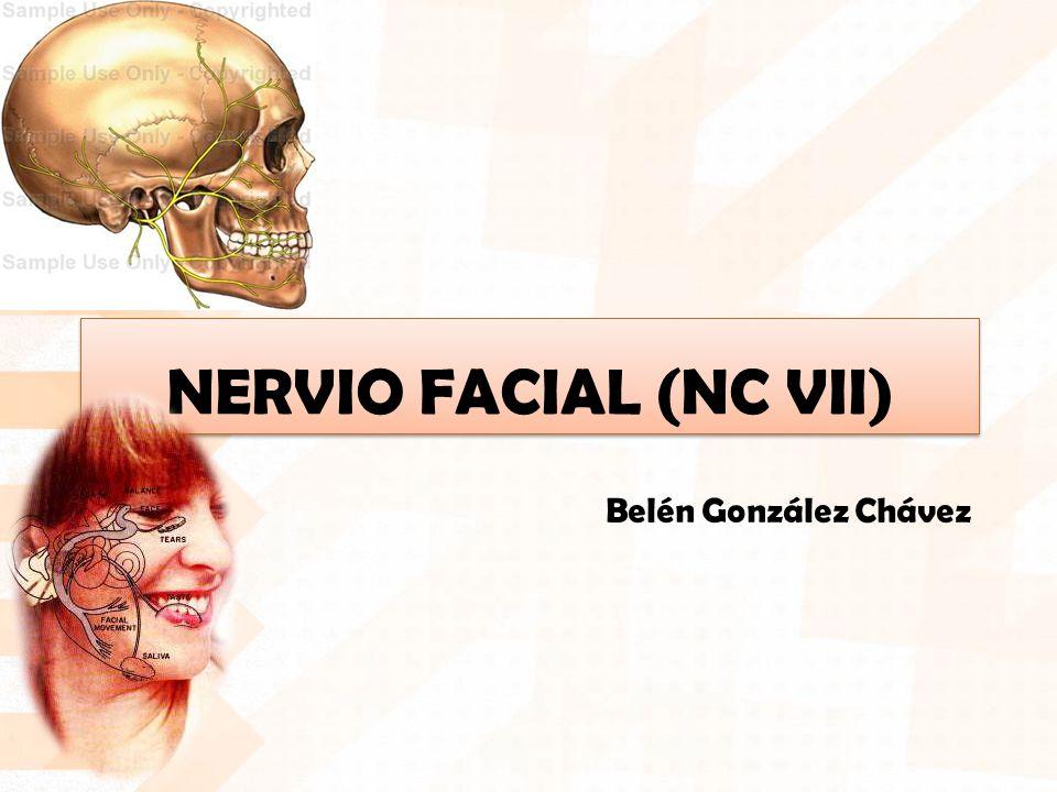 Belén González Chávez NERVIO FACIAL (NC VII)