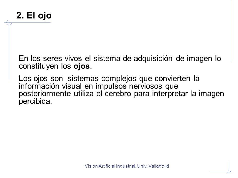 Visión Artificial Industrial. Univ. Valladolid 2. El ojo En los seres vivos el sistema de adquisición de imagen lo constituyen los ojos. Los ojos son