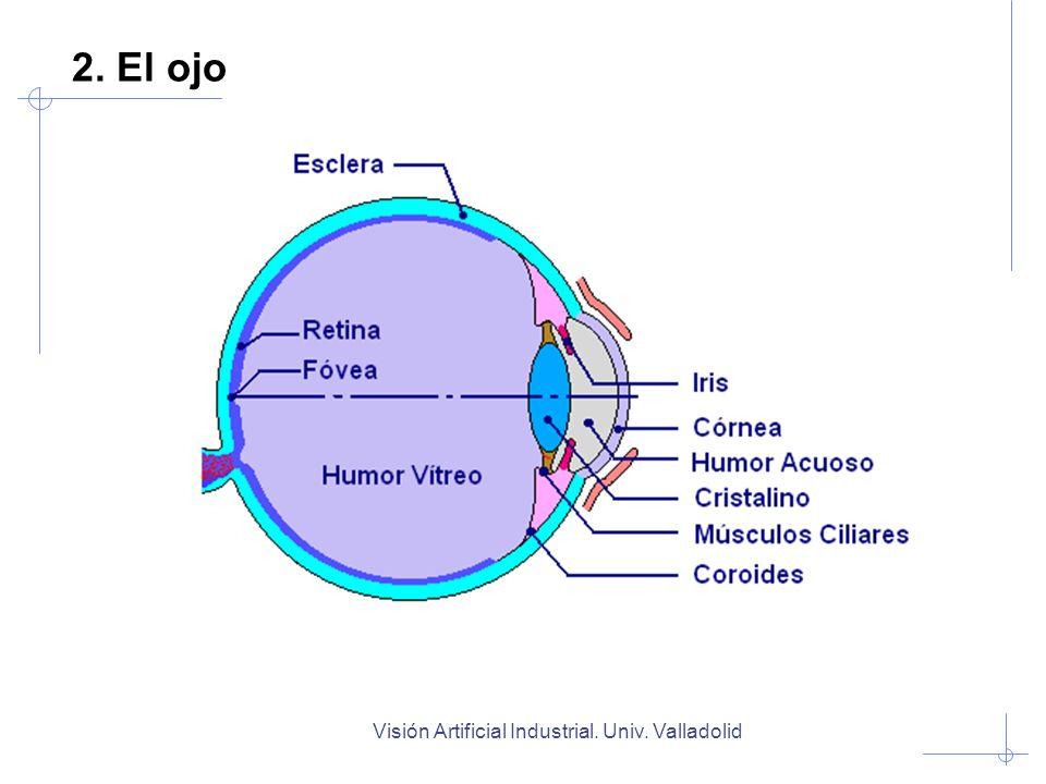 Visión Artificial Industrial.Univ. Valladolid Imagen con buen contraste y amplio rango dinámico.