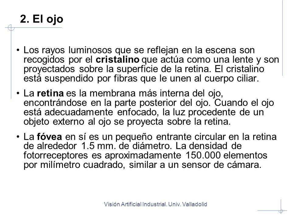 Visión Artificial Industrial. Univ. Valladolid 2. El ojo Los rayos luminosos que se reflejan en la escena son recogidos por el cristalino que actúa co