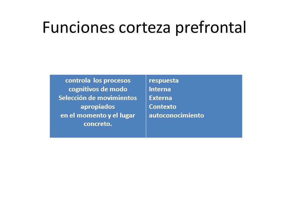 Funciones corteza prefrontal controla los procesos cognitivos de modo Selección de movimientos apropiados en el momento y el lugar concreto. respuesta