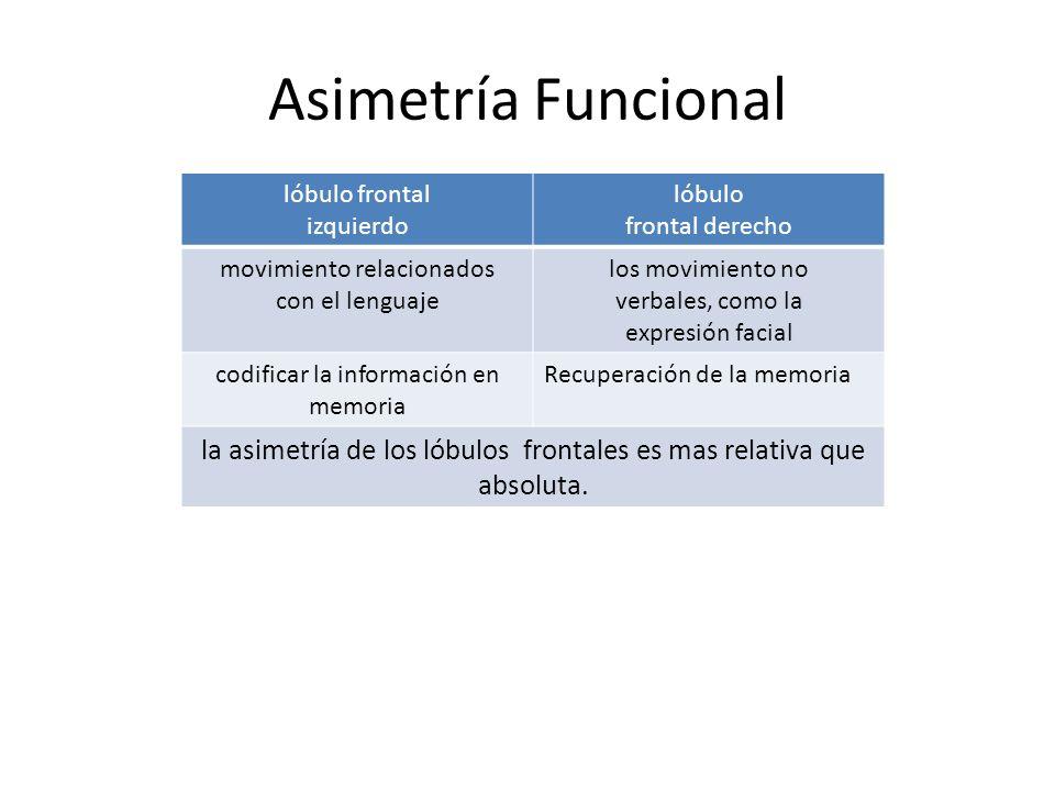 Asimetría Funcional lóbulo frontal izquierdo lóbulo frontal derecho movimiento relacionados con el lenguaje los movimiento no verbales, como la expres