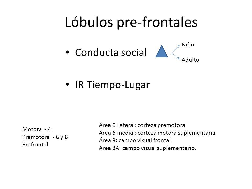Conducta social IR Tiempo-Lugar Niño Adulto Lóbulos pre-frontales Motora - 4 Premotora - 6 y 8 Prefrontal Área 6 Lateral: corteza premotora Área 6 med