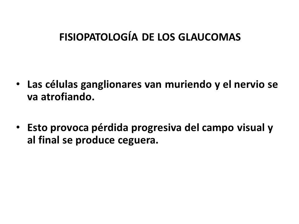 FISIOPATOLOGIA DE LOS GLAUCOMAS Se altera el flujo axoplásmico. Se desencadena expresión de metaloproteinasa 9 ( MMP-9 ). Se desencadena apoptosis y r
