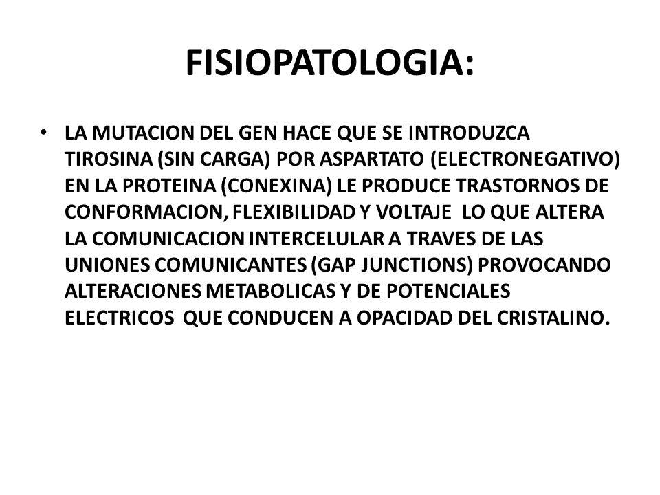 POSICIÓN DE LAS CONEXINAS EN LAS UNIONES COMUNICANTES ( GAP JUNCTIONS ) LOCALIZACIÓN DE LA MUTACIÓN: posicion 3 del amino terminal de la cola citoplam