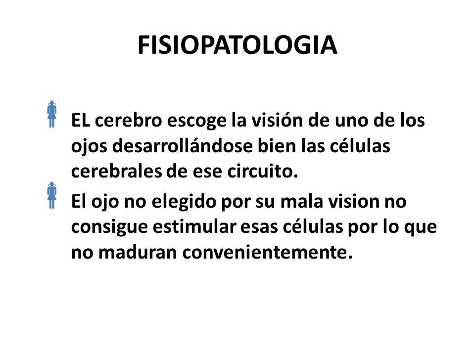 FISIOPATOLOGIA El cerebro favorece el desarrollo de la visión a medida que los estimulos van llegando normalmente a la retina. La ambliopia se produce