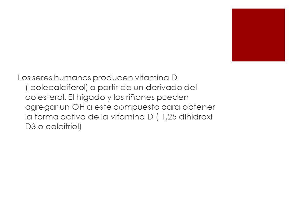 Los seres humanos producen vitamina D ( colecalciferol) a partir de un derivado del colesterol. El hígado y los riñones pueden agregar un OH a este co