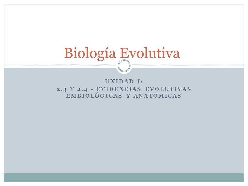 UNIDAD I: 2.3 Y 2.4 - EVIDENCIAS EVOLUTIVAS EMBIOLÓGICAS Y ANATÓMICAS Biología Evolutiva