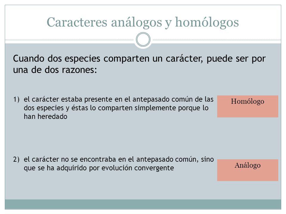 Caracteres análogos y homólogos Cuando dos especies comparten un carácter, puede ser por una de dos razones: 1)el carácter estaba presente en el antep