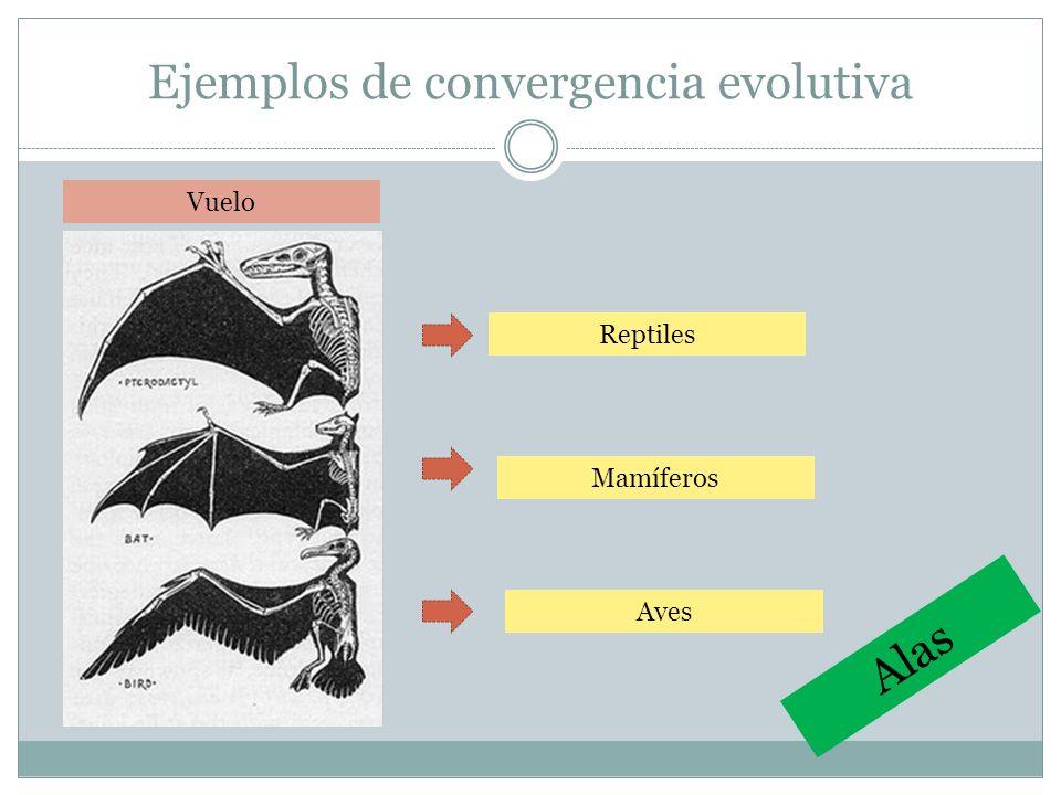 Ejemplos de convergencia evolutiva Vuelo Reptiles Aves Mamíferos Alas