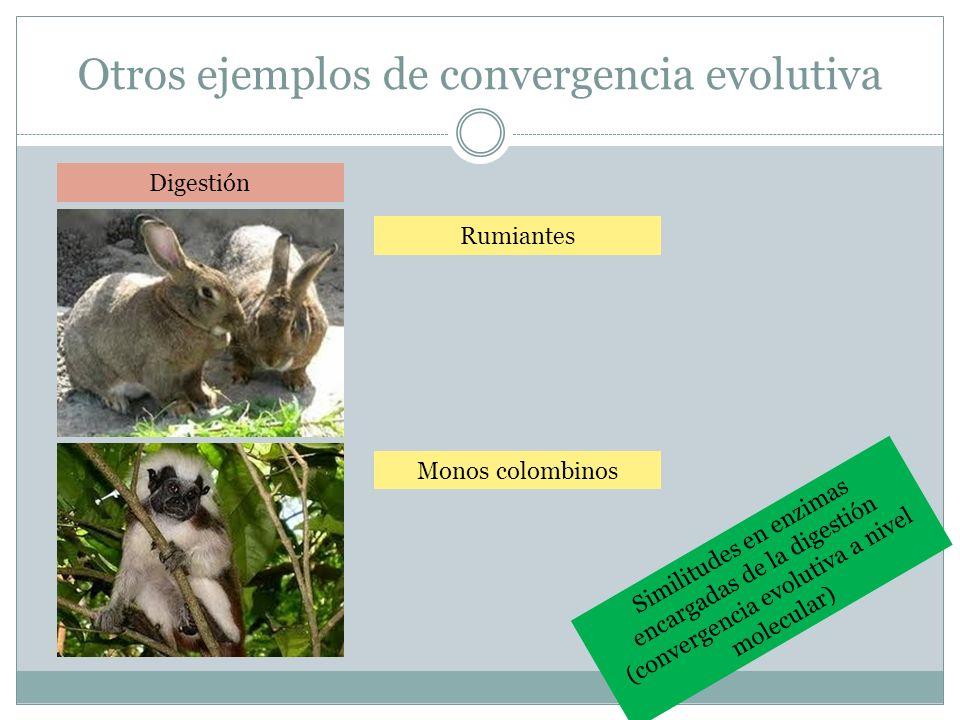 Otros ejemplos de convergencia evolutiva Digestión Rumiantes Monos colombinos Similitudes en enzimas encargadas de la digestión (convergencia evolutiv