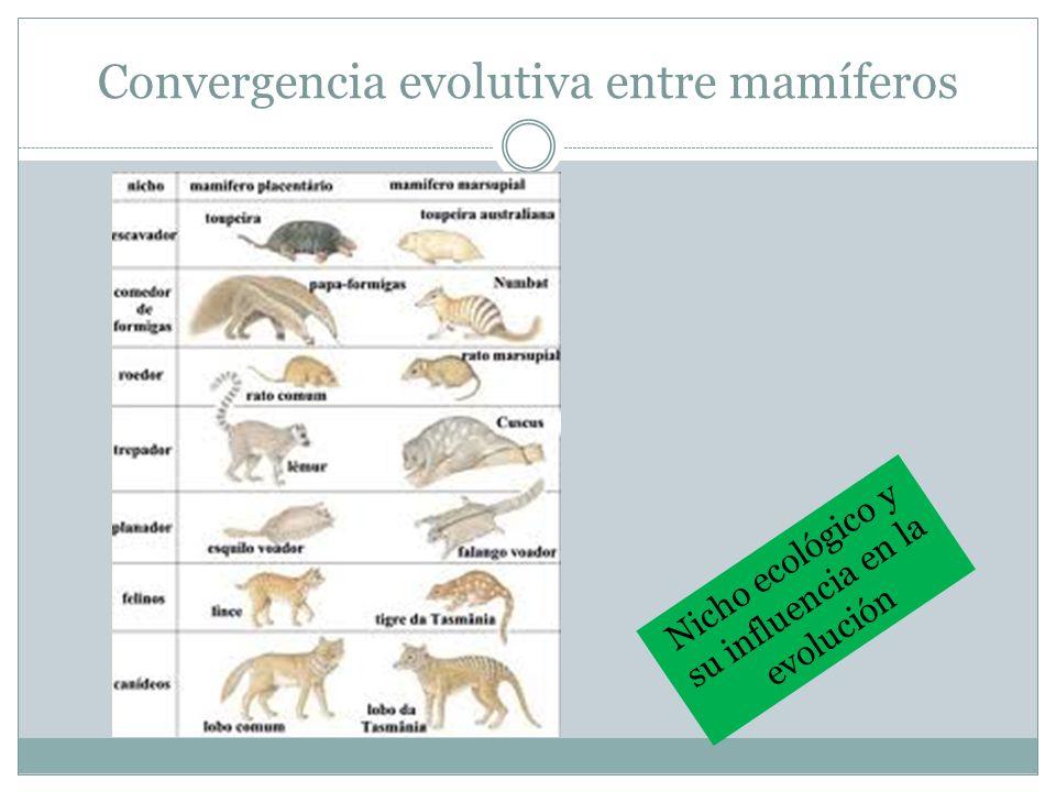 Convergencia evolutiva entre mamíferos Nicho ecológico y su influencia en la evolución