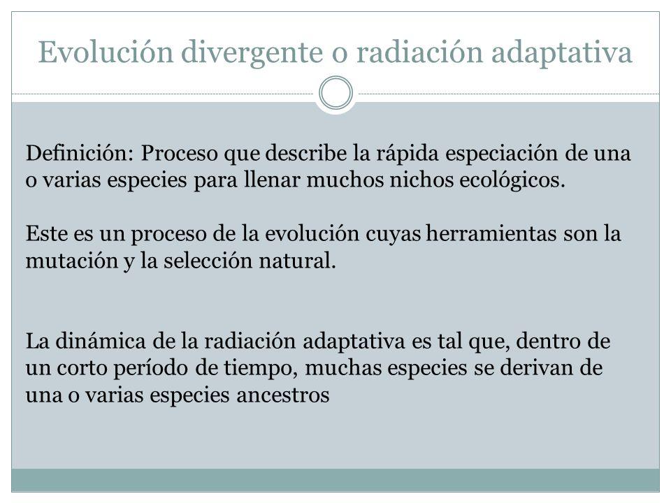 Evolución divergente o radiación adaptativa Definición: Proceso que describe la rápida especiación de una o varias especies para llenar muchos nichos
