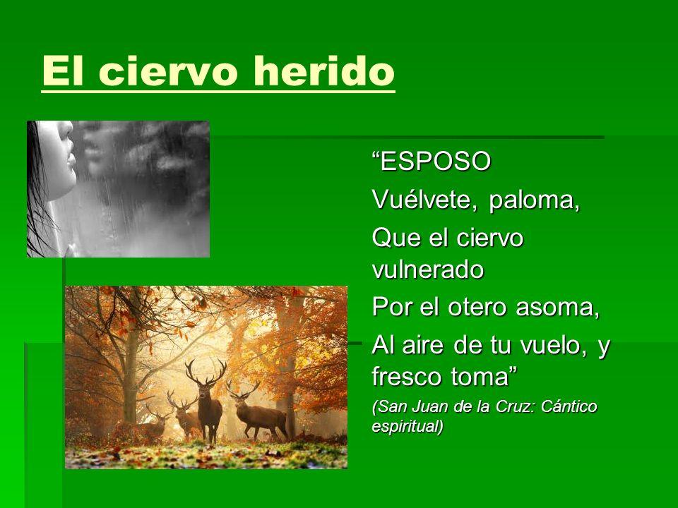 El ciervo herido ESPOSO Vuélvete, paloma, Que el ciervo vulnerado Por el otero asoma, Al aire de tu vuelo, y fresco toma (San Juan de la Cruz: Cántico