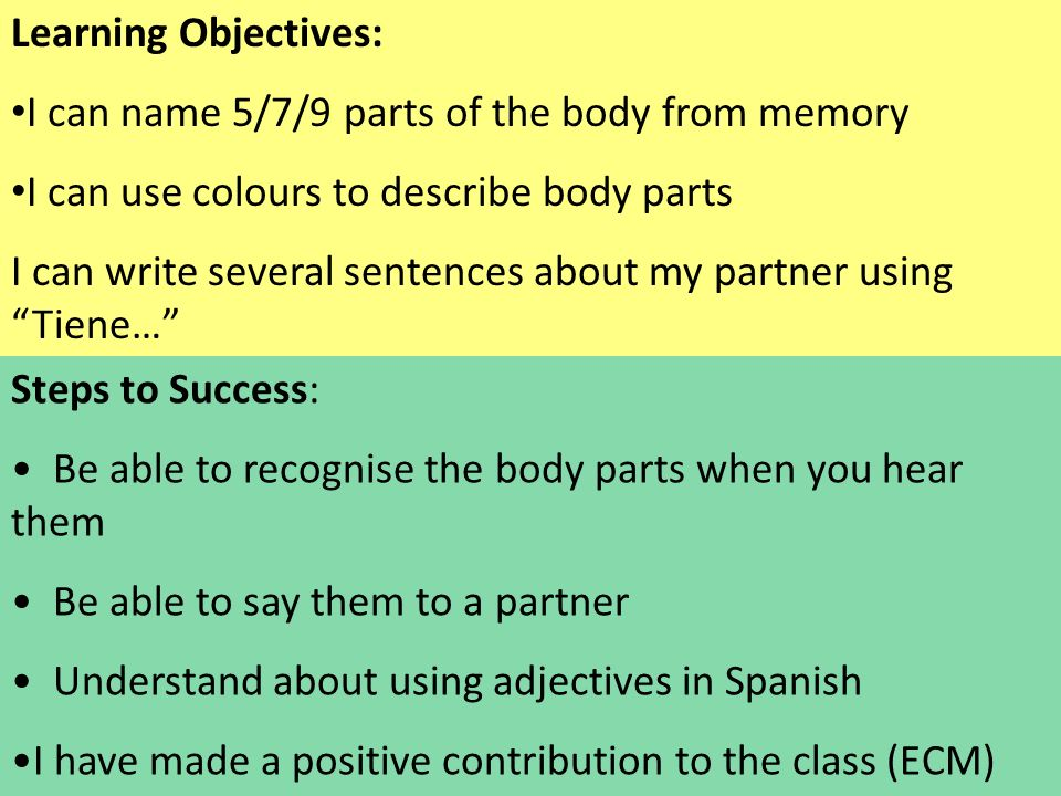 Steps to Success: Be able to recognise the body parts when you hear them Be able to say them to a partner Understand about using adjectives in Spanish I have made a positive contribution to the class (ECM) Learning Objectives: I can name 5/7/9 parts of the body from memory I can use colours to describe body parts I can write several sentences about my partner using Tiene…