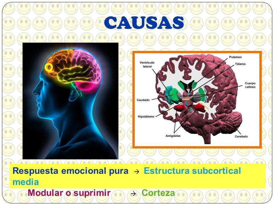 PROCESO DE LA RISAEstímuloNeuronasInterpretación No encuentra coherencia Nos reímos más Diafragma se sacude Ahogos Aumenta FC Impulsos Nervios sensitivos Sistema límbico (Amígdala e hipocampo) Hormonas