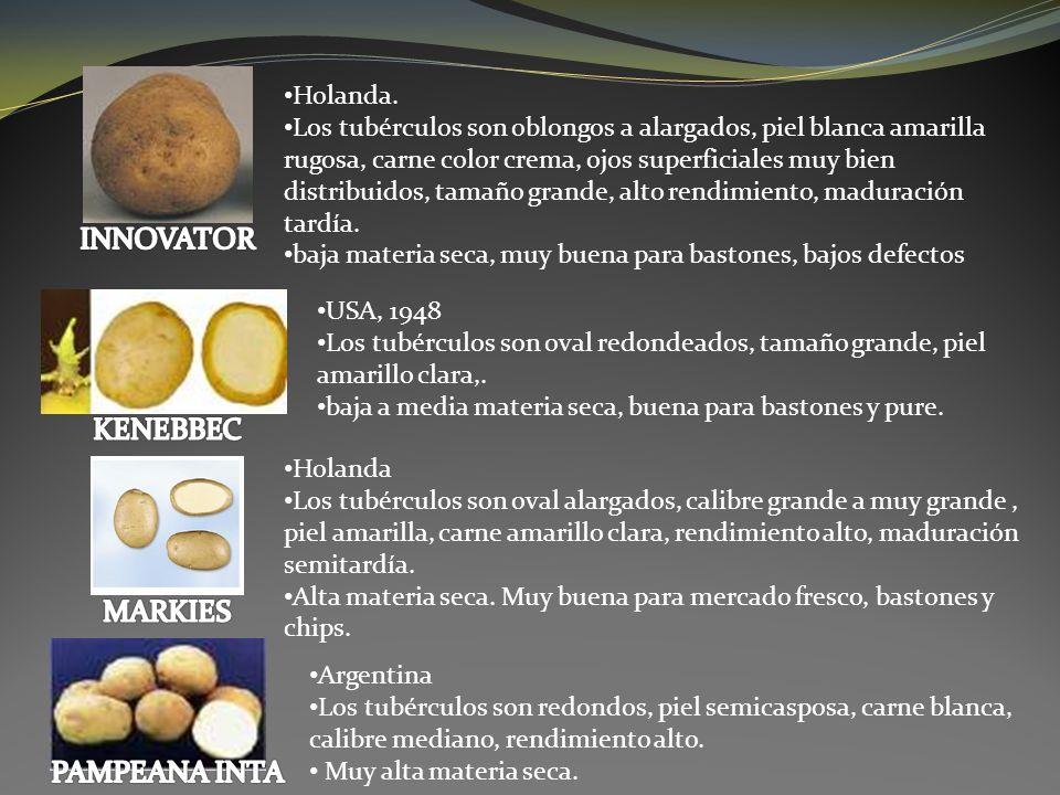 Salador a rodillo: Se utiliza para salar o saborizar los productos a la salida de las líneas continuas de elaboración, ya sean papas o plátano frito, palitos salados, nachos y también productos extruídos.