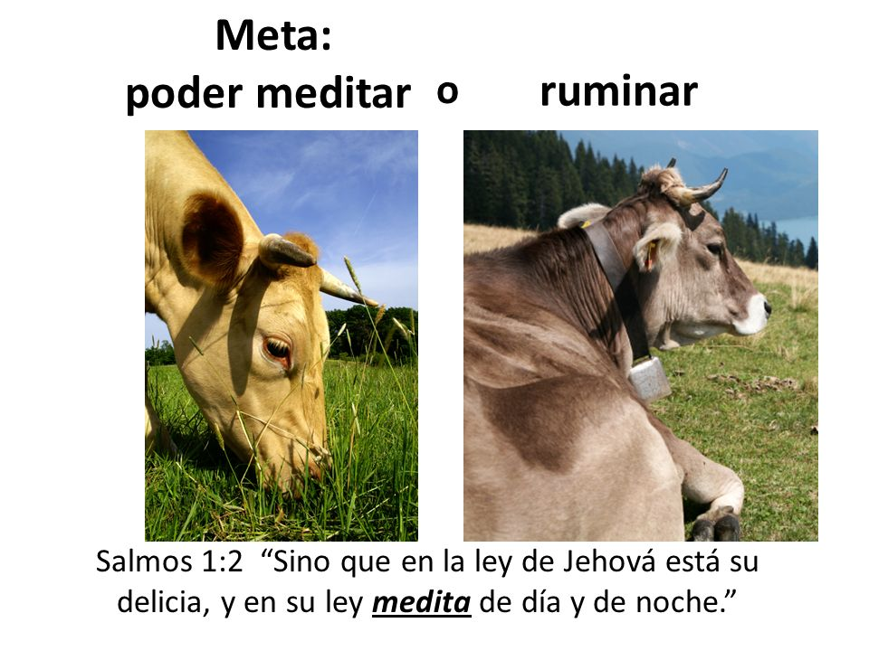 Meta: poder meditar ruminar Salmos 1:2 Sino que en la ley de Jehová está su delicia, y en su ley medita de día y de noche. o