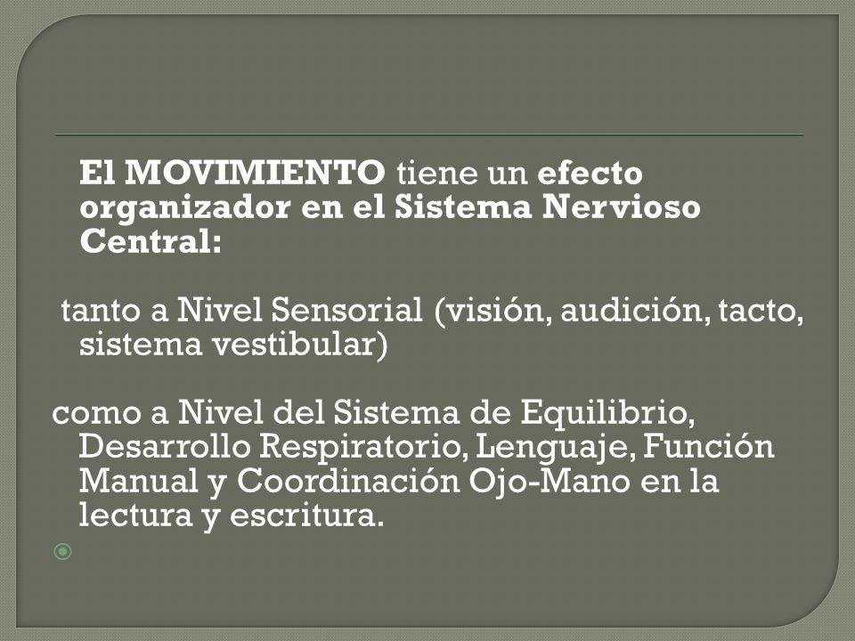 El MOVIMIENTO tiene un efecto organizador en el Sistema Nervioso Central: tanto a Nivel Sensorial (visión, audición, tacto, sistema vestibular) como a Nivel del Sistema de Equilibrio, Desarrollo Respiratorio, Lenguaje, Función Manual y Coordinación Ojo-Mano en la lectura y escritura.
