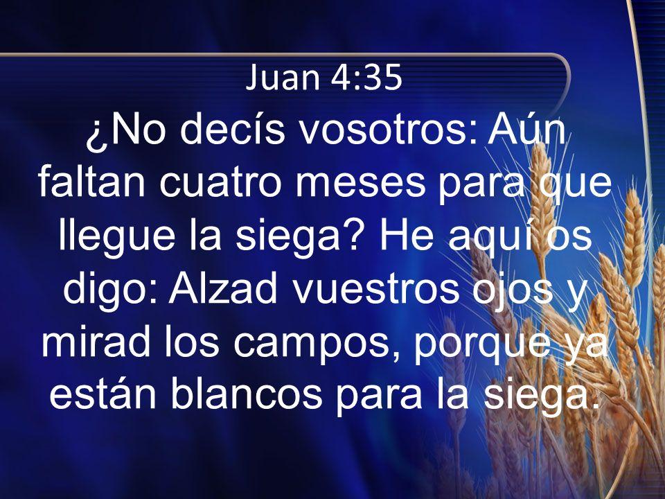 Juan 4:35 ¿No decís vosotros: Aún faltan cuatro meses para que llegue la siega? He aquí os digo: Alzad vuestros ojos y mirad los campos, porque ya est