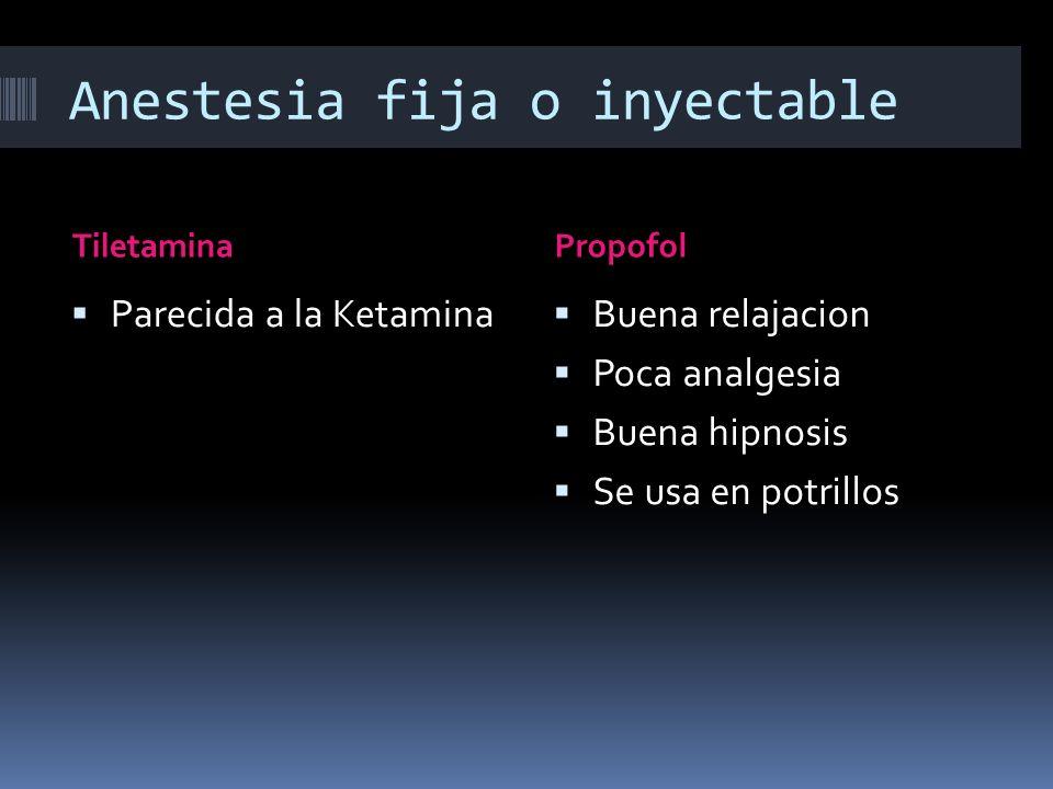 Anestesia fija o inyectable TiletaminaPropofol Parecida a la Ketamina Buena relajacion Poca analgesia Buena hipnosis Se usa en potrillos