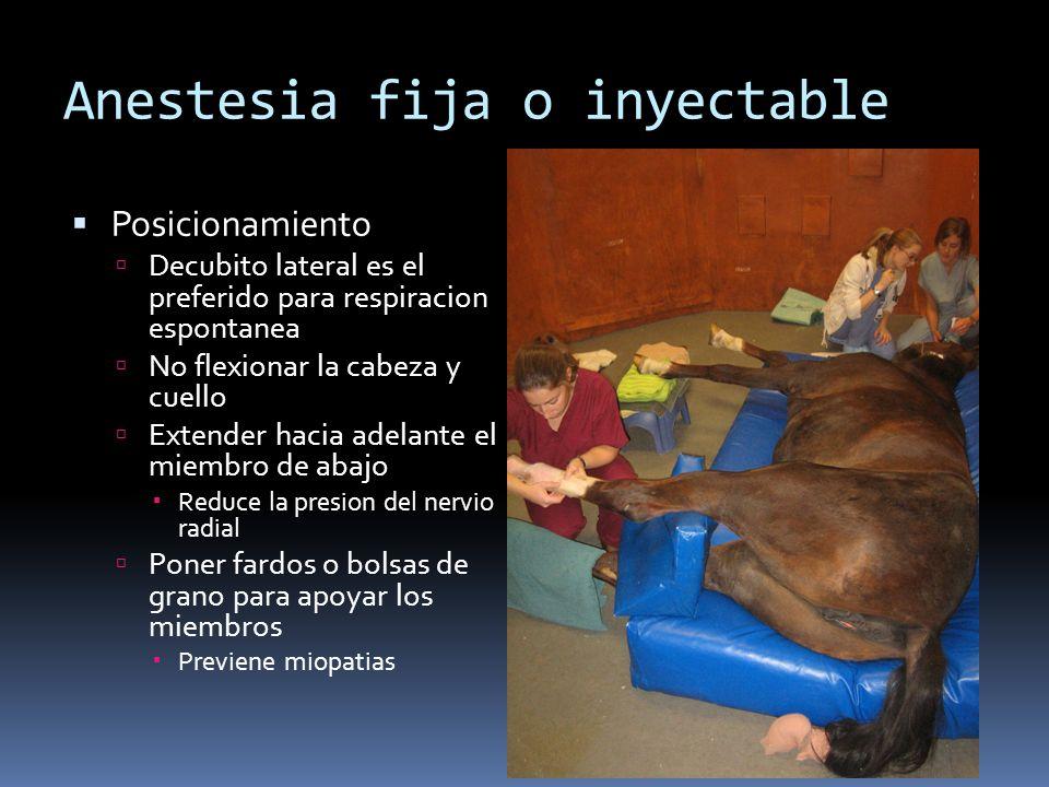 Anestesia fija o inyectable Posicionamiento Decubito lateral es el preferido para respiracion espontanea No flexionar la cabeza y cuello Extender haci