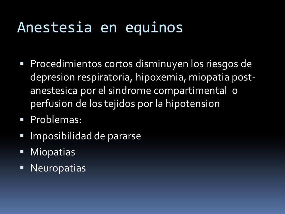 Anestesia en equinos Procedimientos cortos disminuyen los riesgos de depresion respiratoria, hipoxemia, miopatia post- anestesica por el sindrome comp
