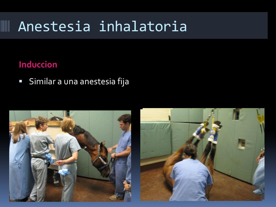 Anestesia inhalatoria Induccion Similar a una anestesia fija