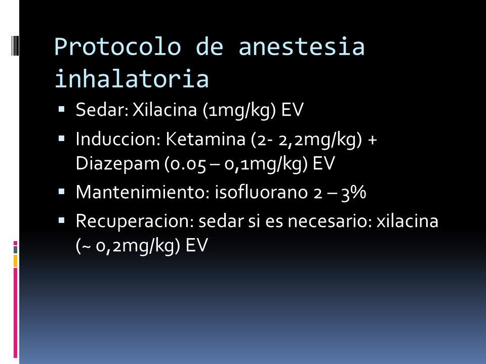 Protocolo de anestesia inhalatoria Sedar: Xilacina (1mg/kg) EV Induccion: Ketamina (2- 2,2mg/kg) + Diazepam (0.05 – 0,1mg/kg) EV Mantenimiento: isoflu