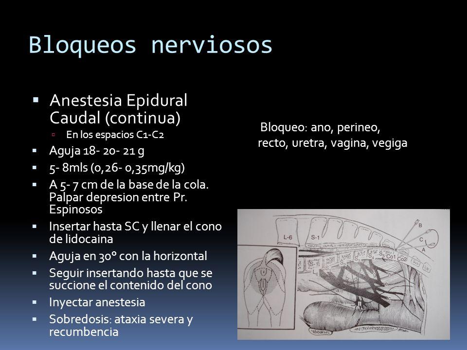 Bloqueos nerviosos Anestesia Epidural Caudal (continua) En los espacios C1-C2 Aguja 18- 20- 21 g 5- 8mls (0,26- 0,35mg/kg) A 5- 7 cm de la base de la