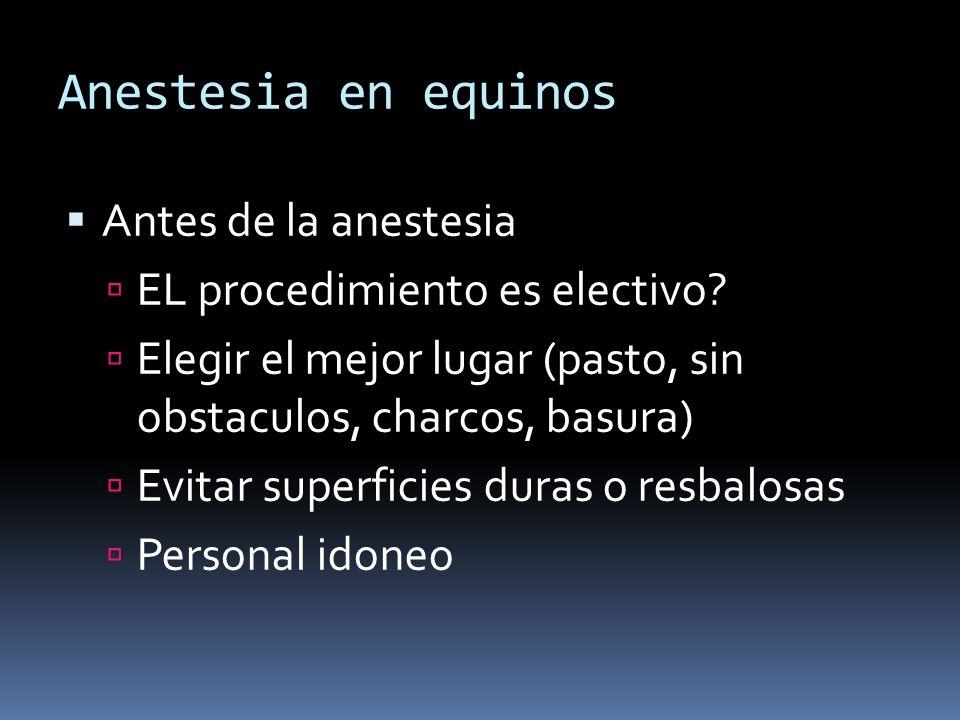 Anestesia en equinos Antes de la anestesia EL procedimiento es electivo? Elegir el mejor lugar (pasto, sin obstaculos, charcos, basura) Evitar superfi